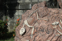 Australian Tertiary Dinosaur Fossil Dig Life Size Statue - LM Treasures Life Size Statues & Prop Rental
