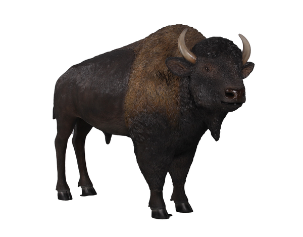Buffalo Bison Life Size Statue - LM Treasures