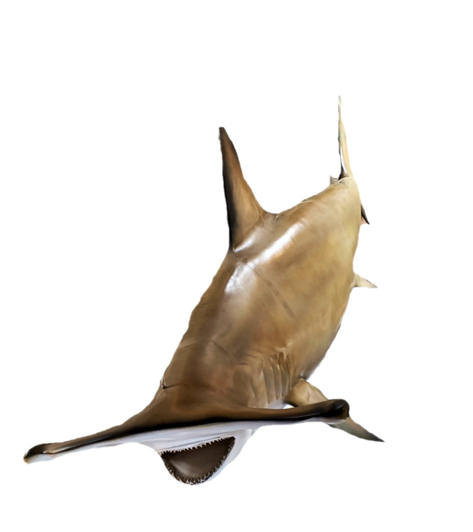 Hammerhead Shark Real Teeth Life Size Statue - LM Treasures Life Size Statues & Prop Rental