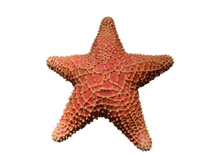 Comic Cushion Starfish Over Sized Statue - LM Treasures Life Size Statues & Prop Rental