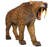Dinosaur Tiger Saber Tooth Smilodon Prehistoric Prop Resin Statue - LM Treasures Life Size Statues & Prop Rental