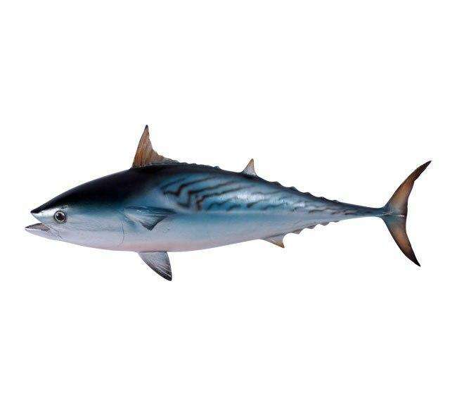Fish Tuna Mackerel Sea Prop Resin Decor Statue - LM Treasures Life Size Statues & Prop Rental