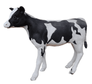 Cow Holstein Calf # 1 Farm Prop Life Size Resin Statue - LM Treasures Life Size Statues & Prop Rental