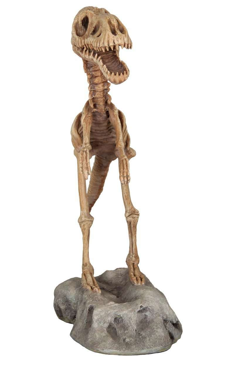 Baby T-Rex Dinosaur Skeleton On Base Life Size Statue - LM Treasures Life Size Statues & Prop Rental