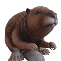Beaver Life Size Statue - LM Treasures Life Size Statues & Prop Rental
