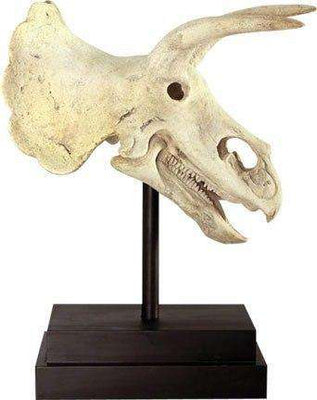 Dinosaur Fossil Triceratops Skull Prehistoric Prop Resin Statue - LM Treasures Life Size Statues & Prop Rental