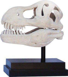 Dinosaur Fossil T-Rex Skull Prehistoric Prop Resin Statue - LM Treasures Life Size Statues & Prop Rental