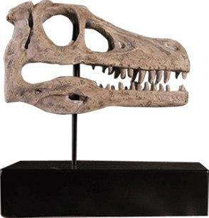 Dinosaur Fossil Raptor Skull Prehistoric Prop Resin Statue - LM Treasures Life Size Statues & Prop Rental