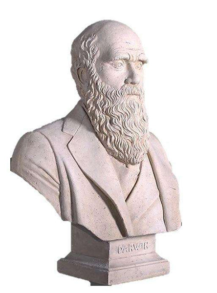 Stone Bust Darwin Greek Roman Prop Resin Decor - LM Treasures Life Size Statues & Prop Rental