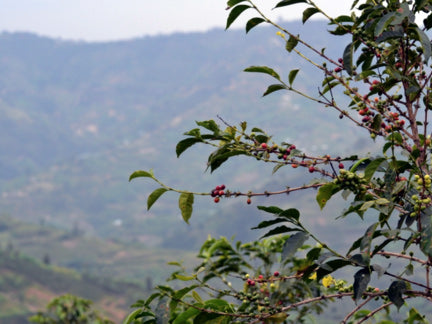 "What does single origin mean & why do we offer ""Africa's finest"" single origin coffee beans?"