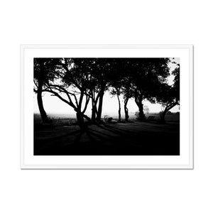UNDER THE TREES - Print to Wall