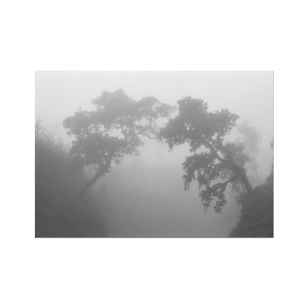 FOGGY TREES - Print to Wall