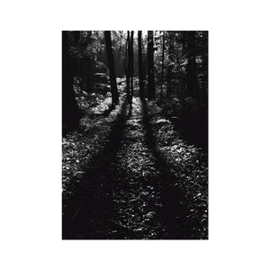 THE WOODS - Print to Wall