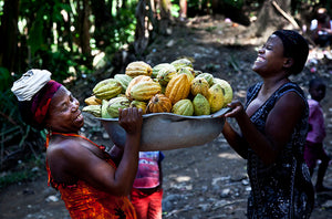 Two (2) Haitian female farmers lifting a tin-recipient with 50+ cacao pods