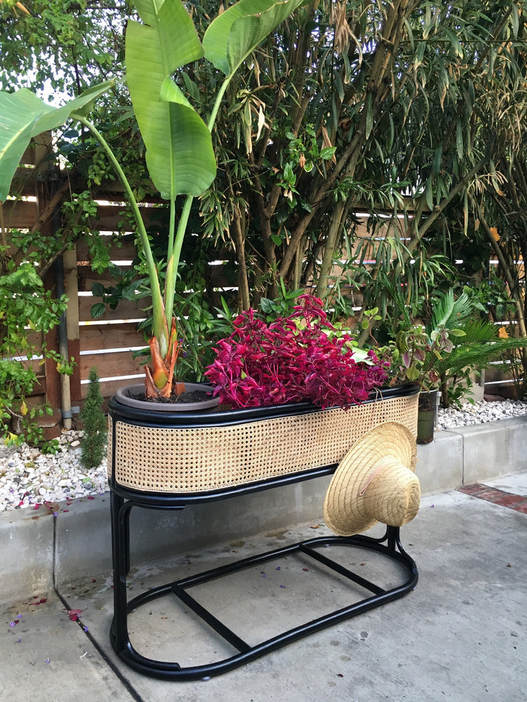 Botanica Double Caned Cubby/Planter - Natural w/ Black Trim