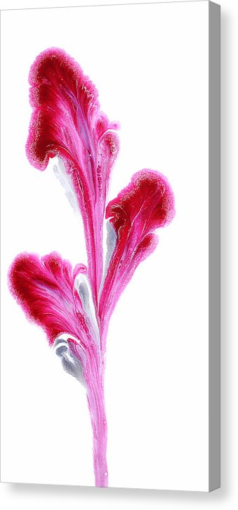 Petals Of Magenta - Canvas Print