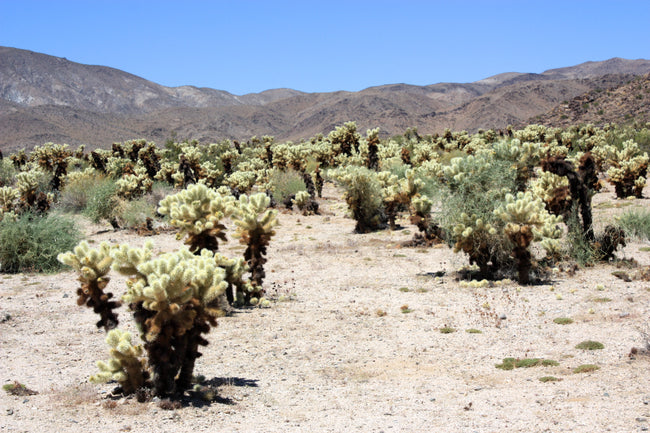 Plants of our National Parks: Part 5 - Joshua Tree