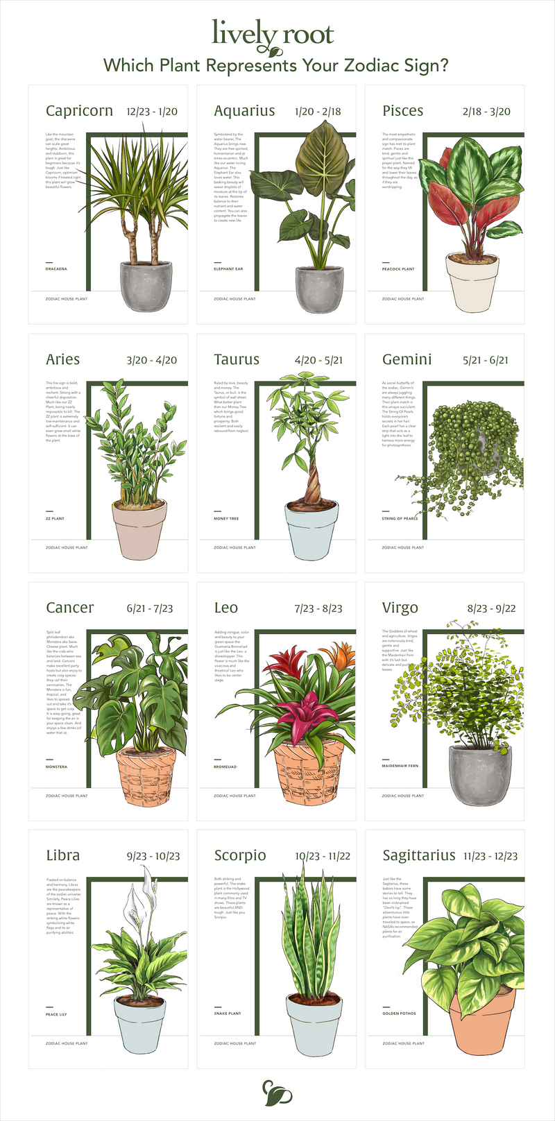 Which Plant Represents Your Zodiac Sign?