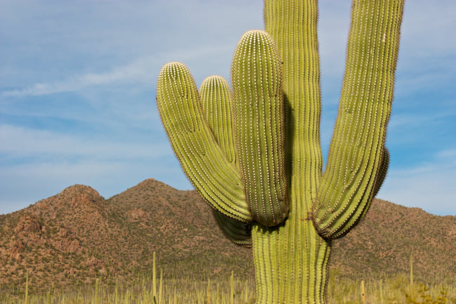 Plants of our National Parks: Part 4 - Saguaro National Park