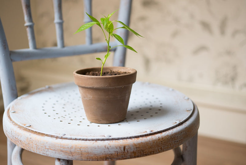 Potted plant on top of a chair