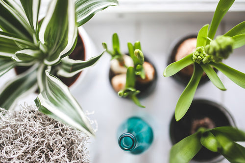 Decoration Ideas with Indoor Plants