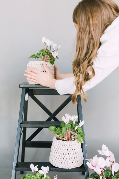 The Four Indoor Plant Care Essentials No One Talks About