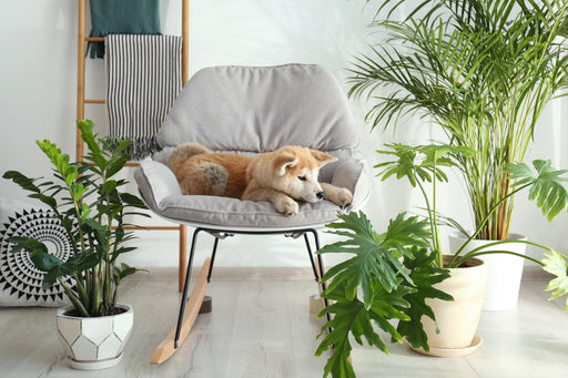 Pet Friendly Plants