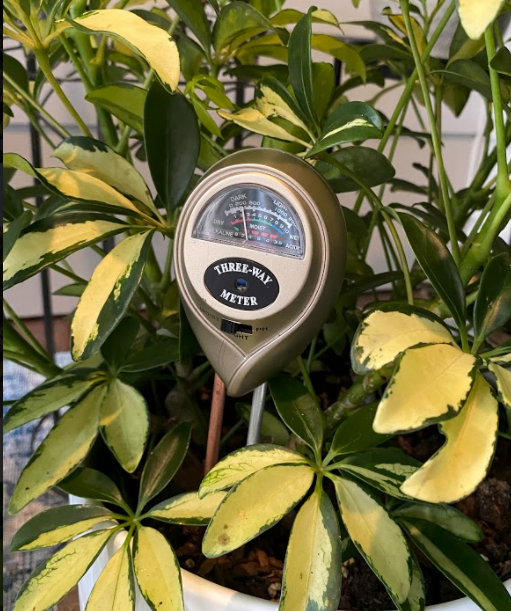 https://www.livelyroot.com/products/3-in-1-soil-tester-with-moisture-light-and-ph-test-soil-test-kit-for-indoor-plants?variant=33275771551826&currency=USD&utm_medium=product_sync&utm_source=google&utm_content=sag_organic&utm_campaign=sag_organic&utm_source=google&utm_medium=cpc&utm_campaign=&utm_term=&utm_content=&gclid=CjwKCAjwy42FBhB2EiwAJY0yQkGeL4HuFigz6GCk4uPQuFy6A6IECyrZZLJoX4Z9oKI-FG0_FufMthoCseYQAvD_BwE