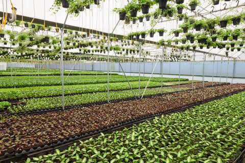 Lively Root Nursery
