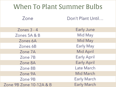 When to plant summer bulbs based on zone