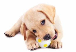 What Do Vets Recommend for Dog Chews