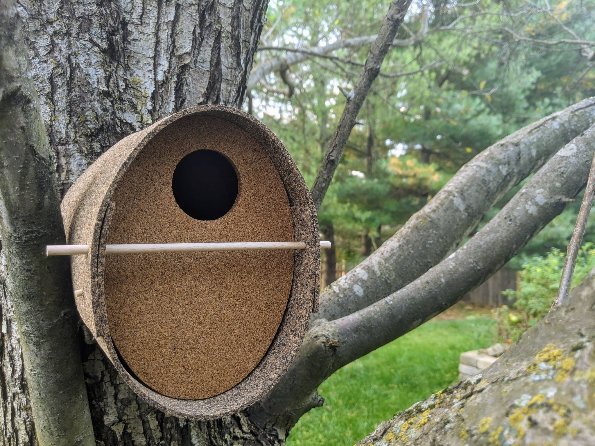 Bird House Guide (When, Where, Why, and How)