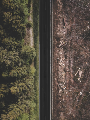 road intersecting a lush forest and a chopped forest