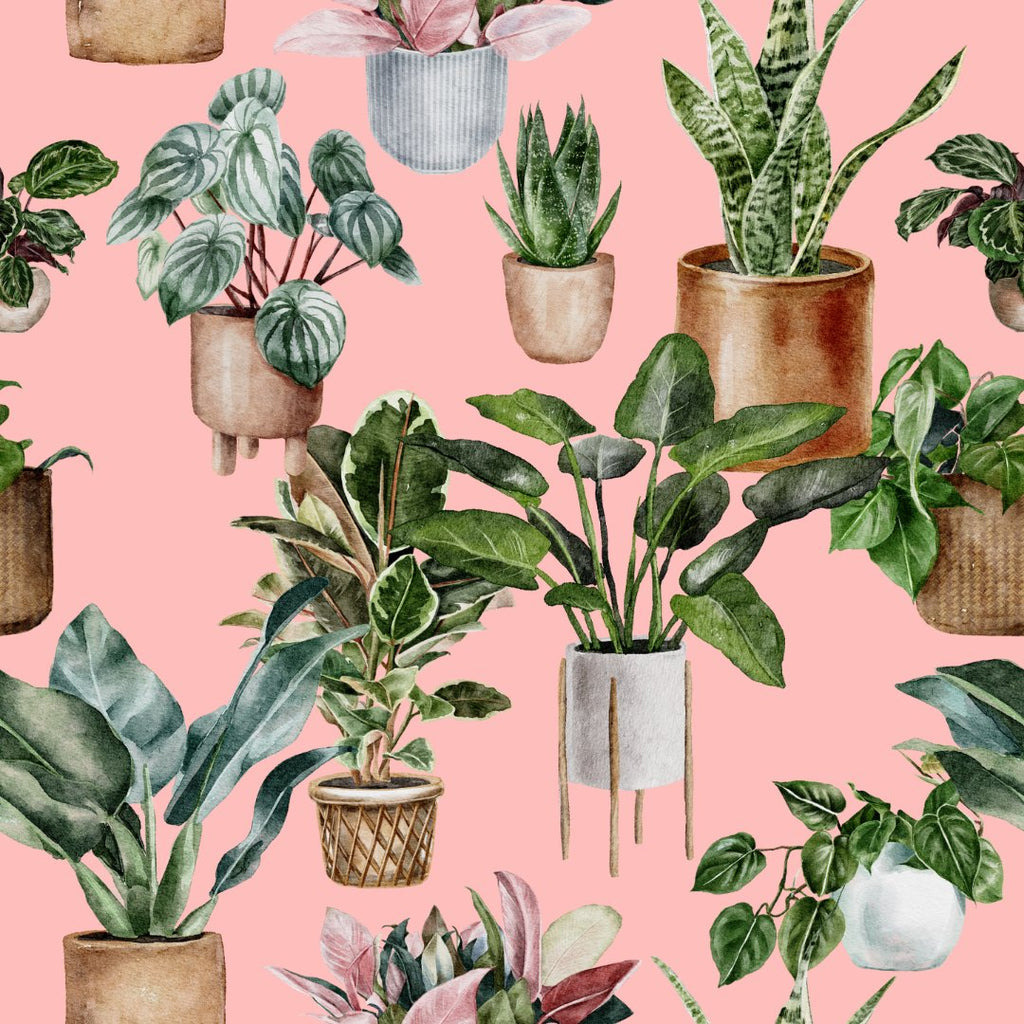 Shop all Houseplants