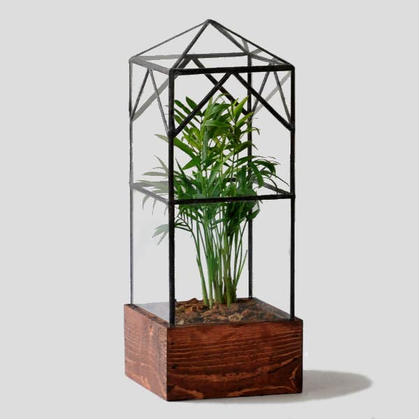 North Tower Glass Terrarium