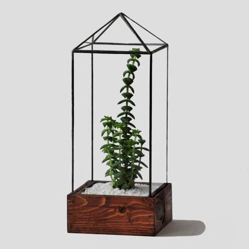 Clear Tower Glass Terrarium