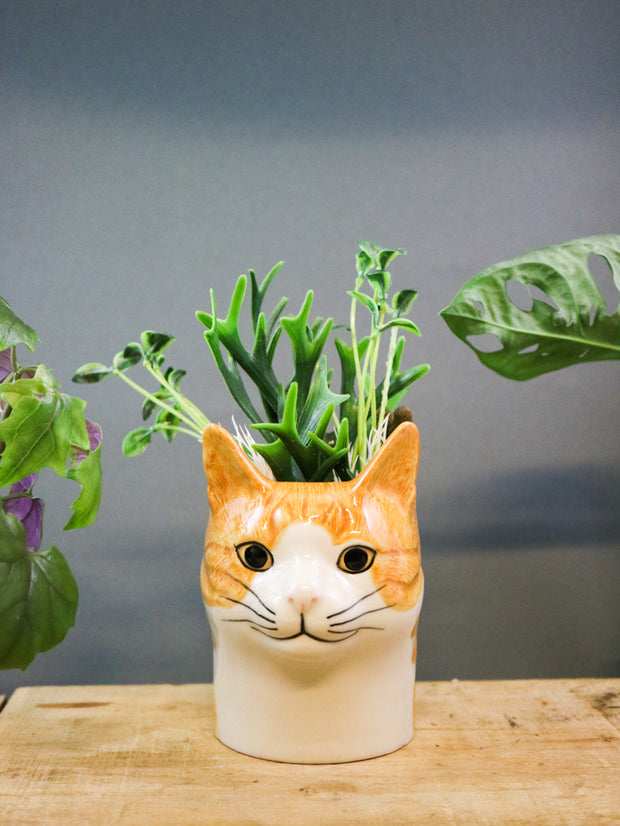Squash the ginger cat pot