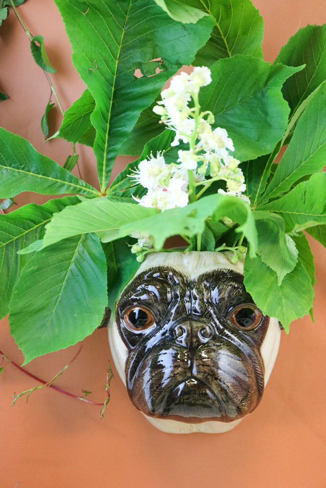 Big pug wallvase
