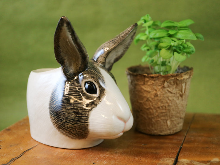 Grey and white dutch rabbit small cup