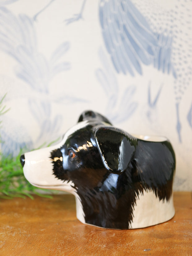 Border collie small cup