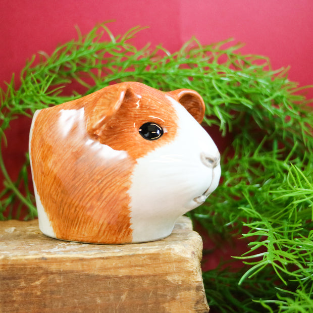 Dutch ginger guinea pig small cup