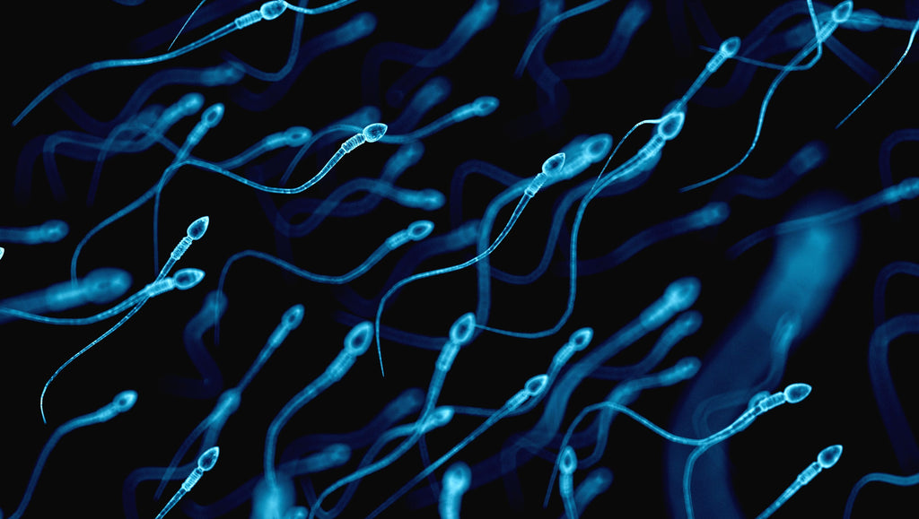 Falling sperm counts that threaten human survival linked to chemical exposure