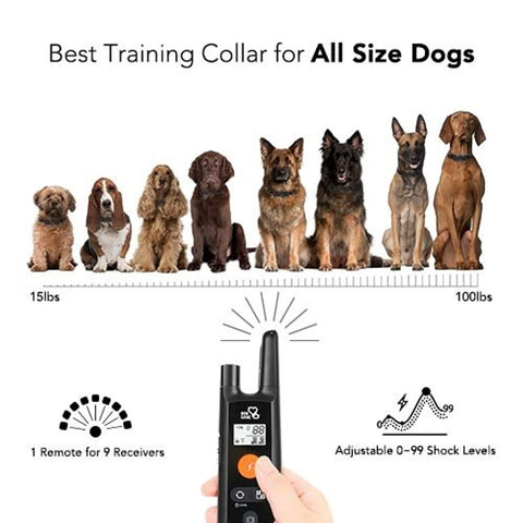 Image of Dog Training Collar