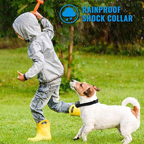 Image of Petrainer PET998DRB Rainproof Dog Shock Collar with Remote Dog Training Collar with Beep Vibrate Shock Electronic Collar, 300 yd Remote Range