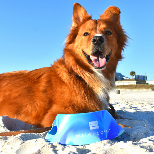 WC Arctic Sky Aqua Fur Dog Bowl