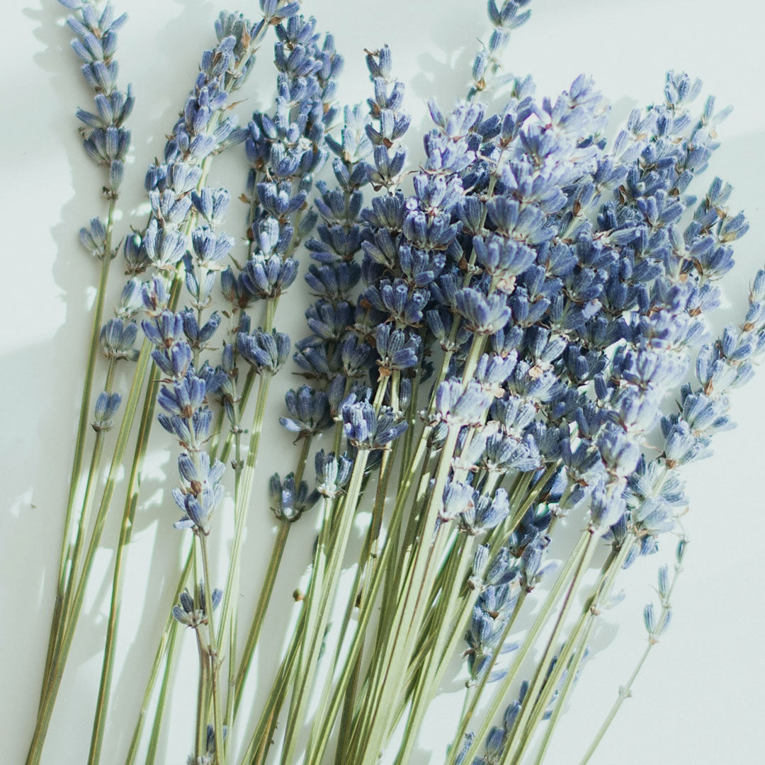 Healing uses for Lavender