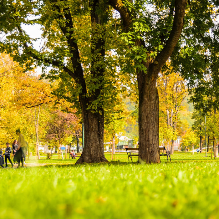 Good Matters: How Cambium Carbon is Revolutionizing Urban Tree Planting