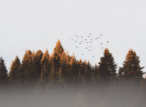 Birds flying with trees in the background