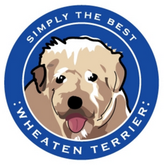 Simply the Best Car Magnet Wheaten Terrier