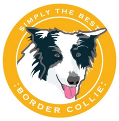 Simply the Best Car Magnet Border Collie